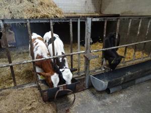 20170909 063 Made- Wagenbergsestraat- Bezoek aan kaasboerderij 't Bosch